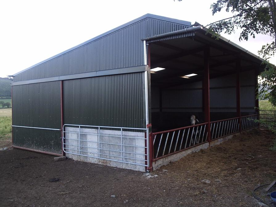 3 span cattle shed with canopy